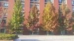 The trees turning auburn? in Autumn in Kanazawa university