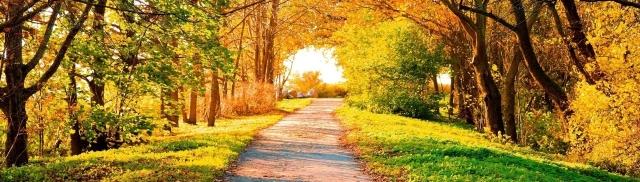 ws_Beautiful_Autumn_Trees_&_Path_1280x800