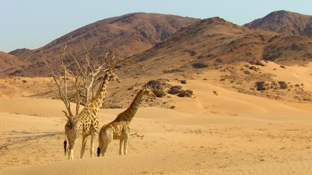 """This is the first image result for """"Africa"""" on google images"""